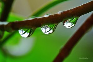 lovely Raindrops by Seawindwindkiss