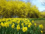 Yellow on Yellow by linowyn