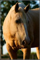Golden Beauty by Phantom303
