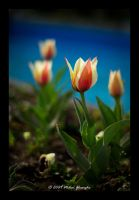 Spring VIII by vipergmc