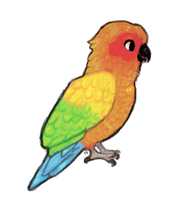 Sun Conure by foxtribe