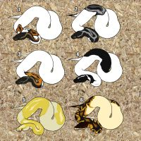 The Royal Python egg's hatched! (Adoptables) by NicksAdoptables