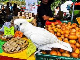 Cacatua sulphurea 3 by kitty974