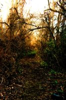 The Road Less Traveled by Arie-Vampiress