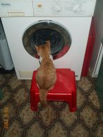 The washing machine is interesting by MevrouwNorks