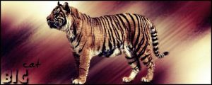 Tiger - signature - by stasiabv