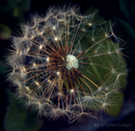 Firework of Nature by Spilled-Sunlight