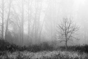 Misty Tree by snakstock