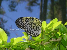 butterfly sanctuary I series by jovee