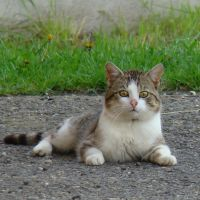 A Cat by bojar
