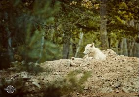 White Wolf I by RemusSirion