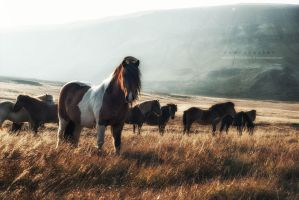 Wild Horses by Stridsberg