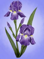Irises by MoonlitLady