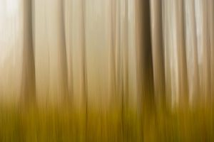 Forest in movement by luk4ss
