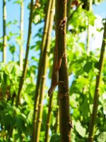 Hanging Around by OECDLapushfan101