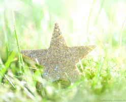 A star is born by pqphotography