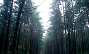 The D Forest. by ZooTatsuya