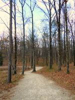 Path through a Yellow Wood by TheCelticWolf