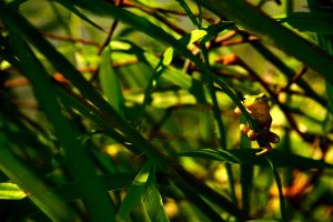 frog by Anestis9985