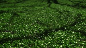 Wet Clover's Carpet by GiulioDesign94