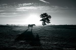 horse with no name by Doelenaer