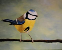 Blue Tit by DontDeconstruct