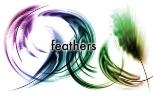 Feather Brushes by vrhmq7