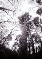 fisheye bw trees by loobyloukitty