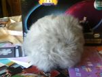 My Tribble Harvey. by GothicTaco198