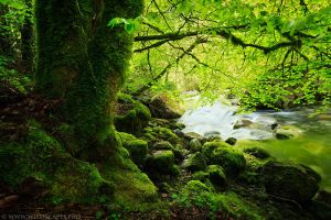 Green Riverside by MaximeCourty