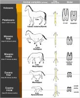 Evolucion del caballo PNG by GianFerdinand