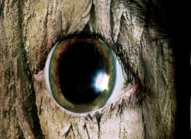 wood eye by menzo