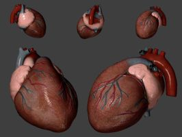 Heart by 3dmodeling
