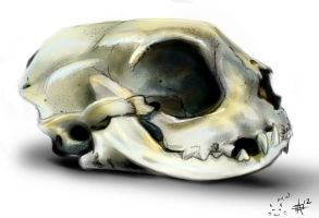Cat skull study by leapingloophead