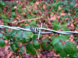 Barbed wire by 212Stock