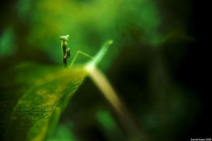 Mantid 1 by homedoggieo