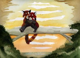 red panders by therealbloodhound