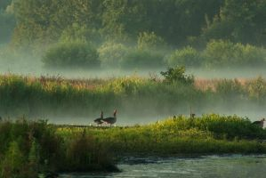 In misty morning land by steppeland
