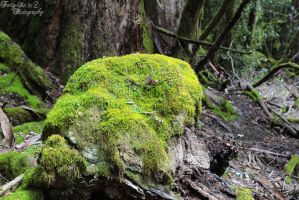 Green Rock by FortySixand2Photos
