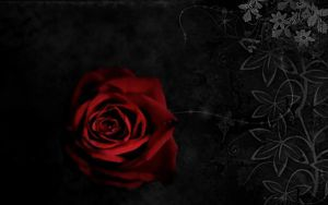 Gothic Rose. by HelloxxAlone