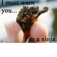 Turtle ninja by ilovetmnt