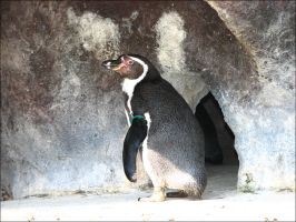 the penguin by jneia