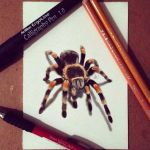Mexican Red knee by Steve-Nice
