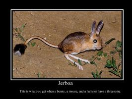 Jerboa by MorrodertheFreakyGuy