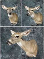 Petite Whitetail Doe by WeirdCityTaxidermy