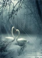 Swans 2 by Child0fBodom