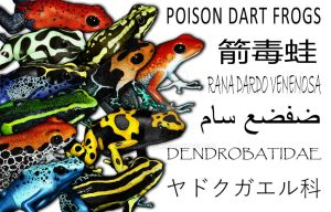 Poison Dart Frogs Collage by rogerdhall