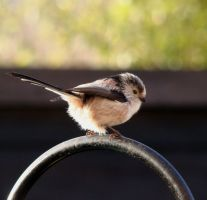 Long tailed tit by Helens-Serendipity