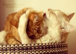 Kisses by TammyPhotography