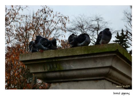 Bored Pigeons by valentino320